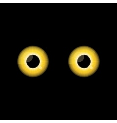 Yellow Cat eyes in dark night vector image