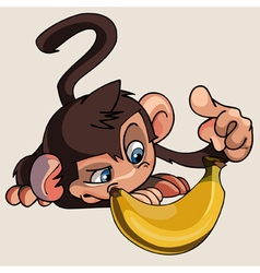 cartoon monkey banana examines vector image