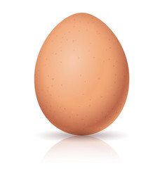 realistic egg on white background for design vector image