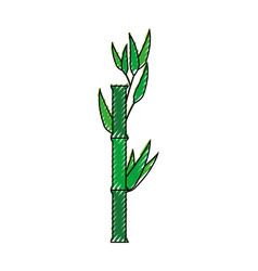bamboo japanese plant vector image
