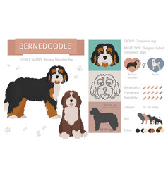 designer crossbreed hybrid mix dogs collection vector image