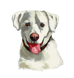 Head a white labrador retriever dog vector