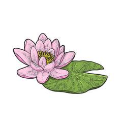 lotus nelumbo flower sketch vector image