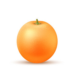Realistic orange fruit 3d isolated vector