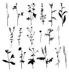 Set ofsilhouettes herbs and flowers vector