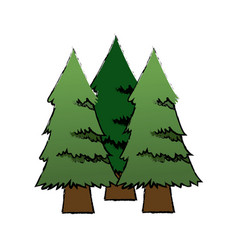 three pine tree foliage trunk forest icon vector image