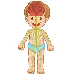 Little boy with nervous system vector image vector image