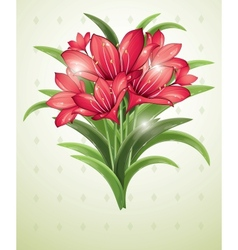 bunch of red lilies vector image