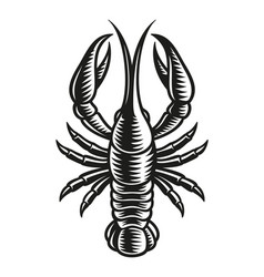 cancer zodiac sign vector image