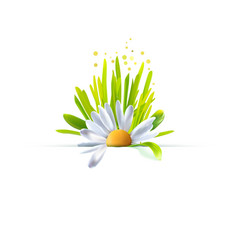 Chamomile with grass decorative element vector