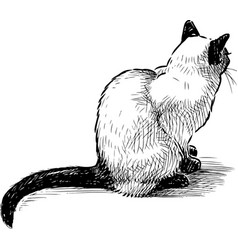 Hand drawing sitting domestic thai cat vector