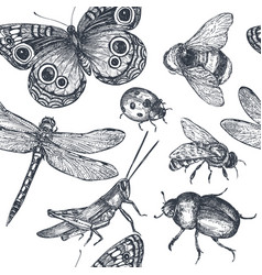 insects sketch decorative seamless pattern vector image