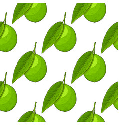 lime fruit hand drawn colored sketch as seamless vector image vector image