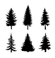 Set of black silhouettes of pine trees on white vector
