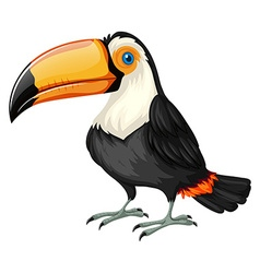 Toucan standing on white background vector