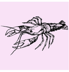 Crayfish lobster vector