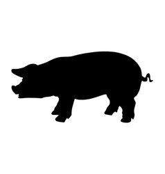 Pig silhouette isolated on white background vector