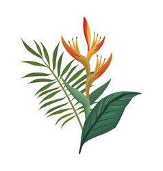 bird of paradise flower and leaves palm vector image vector image