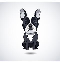 French bulldog isolated on white background vector image
