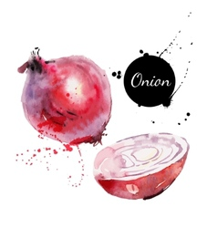 Red onion Hand drawn watercolor painting on white vector image vector image
