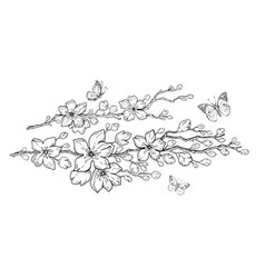 cherry flower blossom botanical art spring vector image