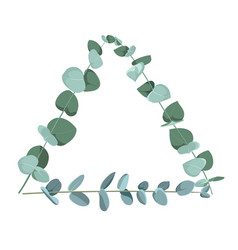 eucalyptus tropical plant in form triangle on vector image