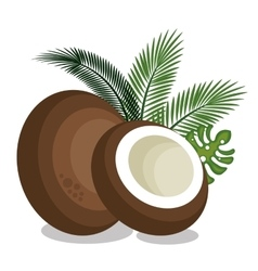 icon coconut slice design vector image