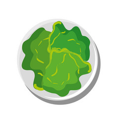 Lettuce vegetable isolated vector