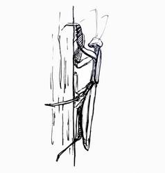 Mantis line drawing vector