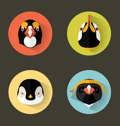 Penguin portraits with flat design vector