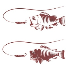 sea bass and lure template vector image