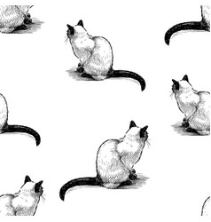 Seamless pattern sitting domestic thai cats vector
