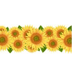 Sunflower border isolated white background vector