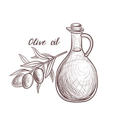 Drawing olive oil vector