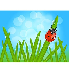 Ladybug on wet grass vector