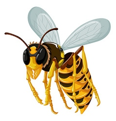 Single wasp flying on white background vector image