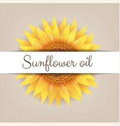 Sunflower flower with paper banner vector