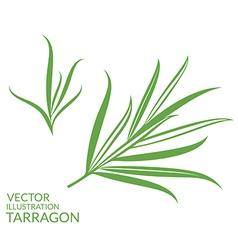 Tarragon Isolated plants on white background vector image