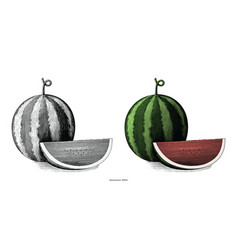 watermelon hand drawing vintage clip art isolated vector image