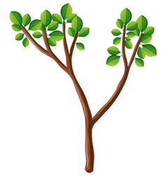 wooden branch with green leaves vector image