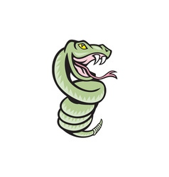 Rattle Snake Coiling Up Cartoon vector image