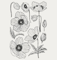 anemone flower drawing set isolated wild vector image