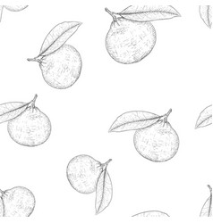 mandarin orange hand drawn black and white sketch vector image