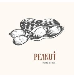 Peanut Card Hand Draw Sketch vector