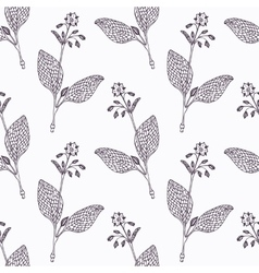 Hand drawn borage branch outline seamless pattern vector image vector image
