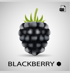 blackberry sweet fruit forest berry isolated on vector image