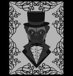 Cute with a pug in old-fashioned tuxedo and vector