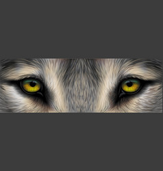 eyes a wolfi vector image