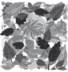 Monochrome Autumn Leaves vector image