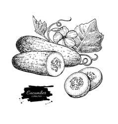 Cucumber hand drawn Isolated cucumber vector image